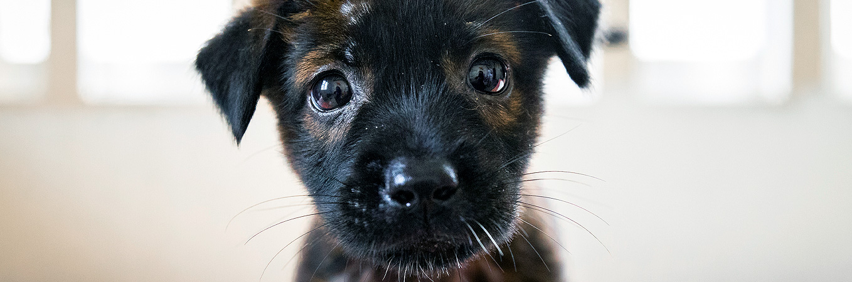 © FOUR PAWS   Animal Rescue Cambodia